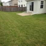 back yard 01